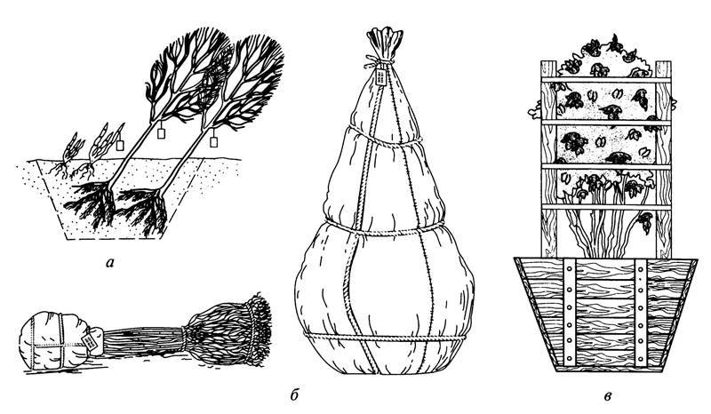 Посадка деревьев и кустарников в контейнеры