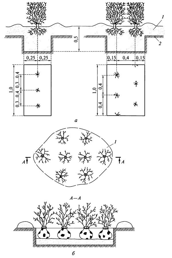 Схемы посадки кустарников