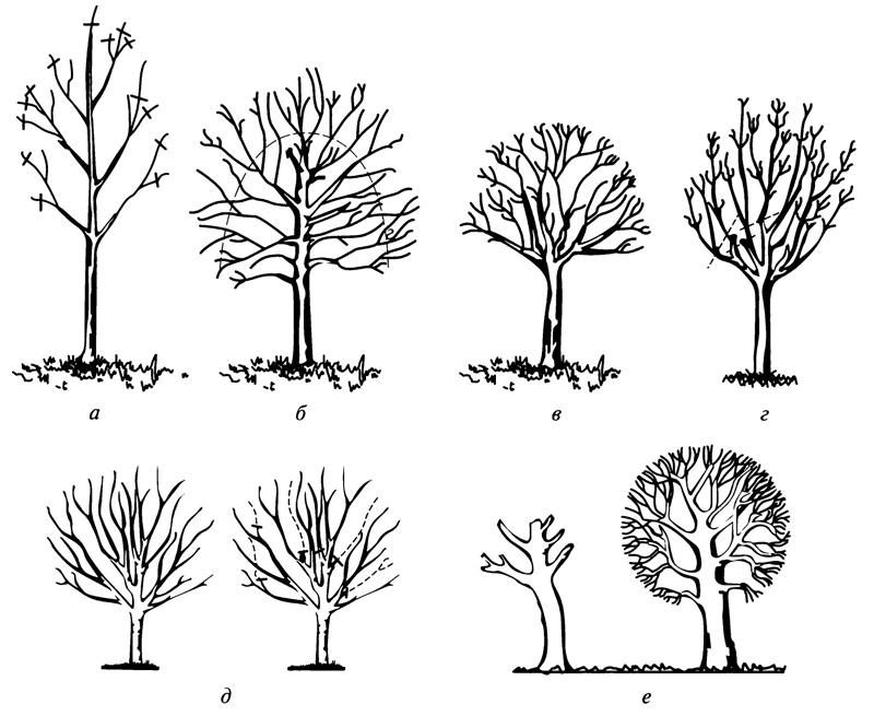 деревьев: а — укорачивание