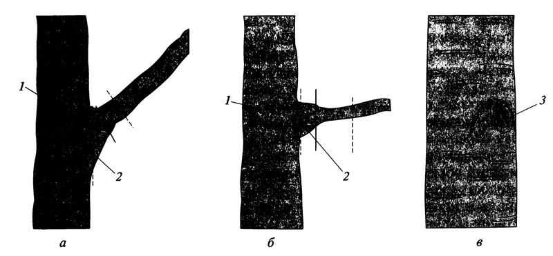 Схема удаления сухих ветвей