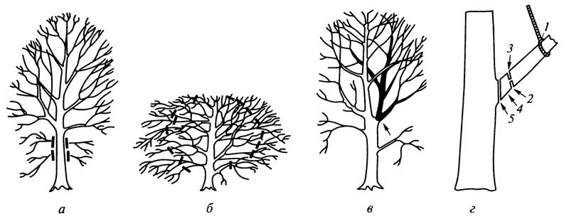 Схемы формирования деревьев