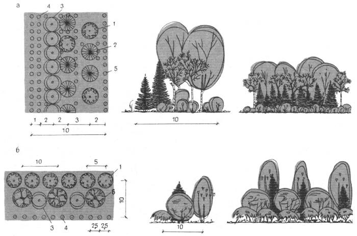 Шумозащитные посадки зеленых