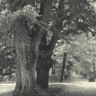 Царское Село. Екатерининский парк. Липовая аллея в Старом саду. Фотограф М.А. Величко