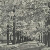 Царское Село. Екатерининский парк. Аллея у Виттоловского канала. Фотограф М.А. Величко