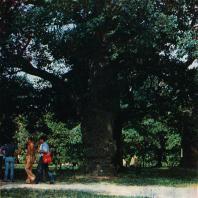 Коломенское. Вековые дубы
