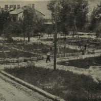 Ташкент. Озеленение квартала в соцгороде при текстильном комбинате