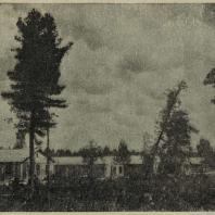 Нижний Тагил. Для строительства бараков лес вырублен без учета потребностей озеленения