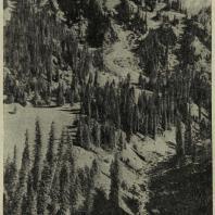 Алма-Ата. Облик гористой местности при сочетании камня и высокой зелени