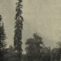 Павловский парк. Вид в «старой Сильвии»
