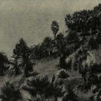 Зимний пейзаж парка в субтропиках