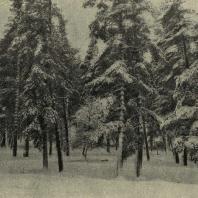 Зимний пейзаж парка