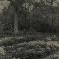 Пейзаж в лесопарке. Примулы