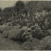 Пейзаж в лесопарке. Труппа цветущих многолетников