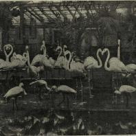 Москва. Фламинго в зимнем помещении зоопарка