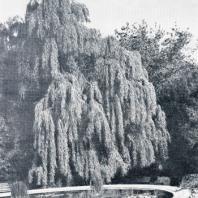 Водоемы парка Монтедор